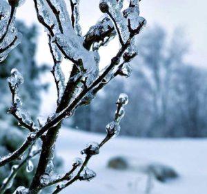 Чого очікувати закарпатцям від погоди у п'ятницю, 8 грудня