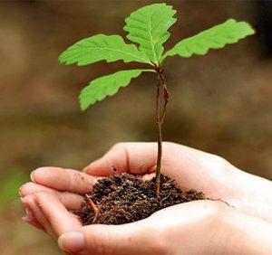 В Україні стартує масштабний екологічний проєкт «Зелена країна»