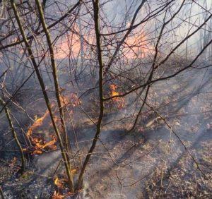 Закарпатці щодоби додають роботи вогнеборцям і завдають шкоди довкіллю