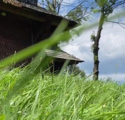 Стародавні дерев'яні церкви Закарпаття: Ірина Петрова відзняла серіал про унікальні пам'ятки (відео)